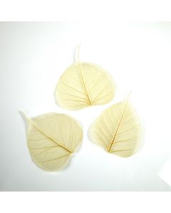 Natural Skeleton Leaves. Pack of 50